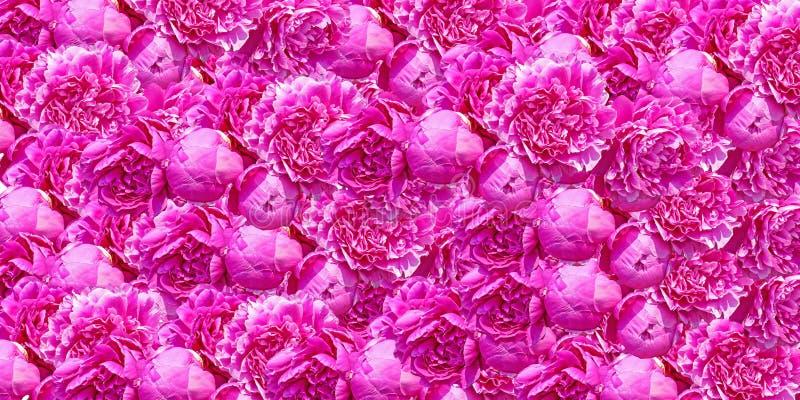 Stochastisches Muster des Hintergrundes von der hellen rosa Pfingstrose lizenzfreies stockfoto