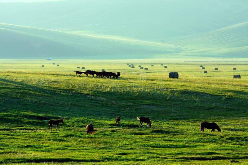 Stock farm. There are many livestocks in the stock farm royalty free stock photo