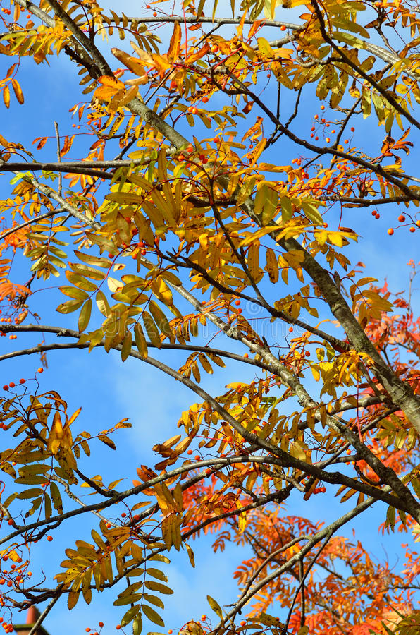 Stock image of Autumn foliage in New England, USA royalty free stock images