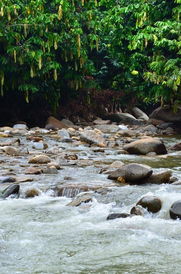 Stock image of Janda Baik river, Malaysia. Janda Baik is a small village in Bentong Pahang, Malaysia stock image