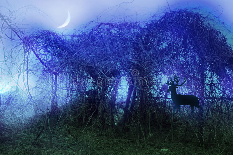 Stock image of mystical thicket royalty free illustration