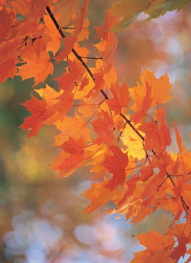 Stock mit Blättern stockfotos