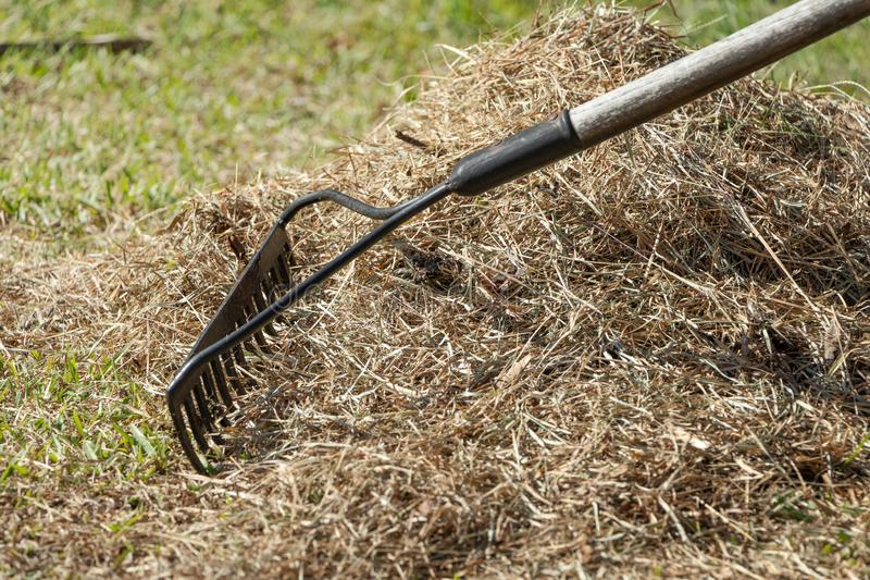 Stock photo cleaning up the grass with a rake aerating and scarifying the lawn in the garden 10. Stock photo cleaning up the grass with a rake aerating and stock images