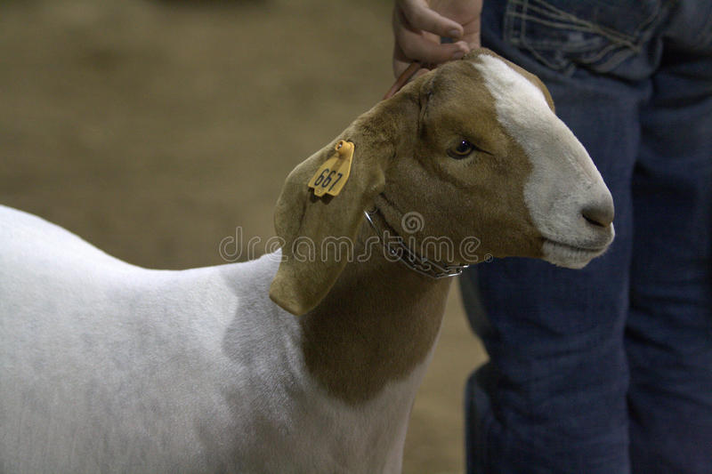 Download Stock and Rodeo Show editorial photography. Image of wester - 27594227