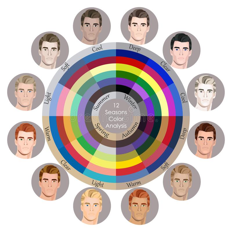 Free Stock Vector Seasonal Color Analysis Palette For All Types Of Male Appearance. Best Colors For 12 Types Stock Image - 172464191