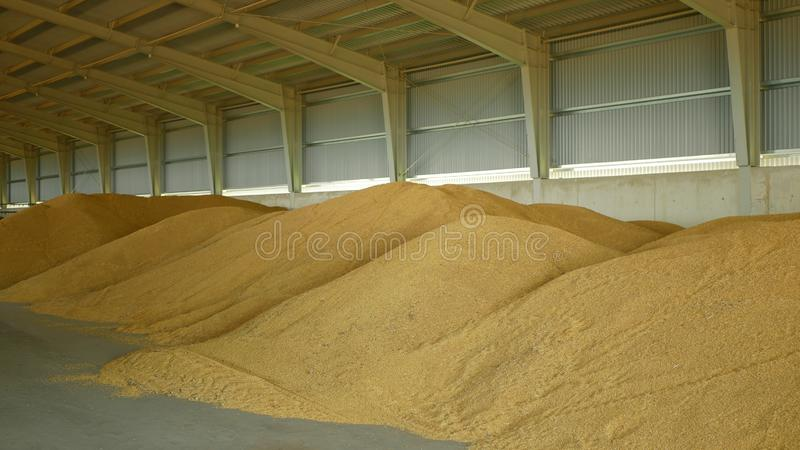 Stock or warehouse pile wheat store, barley and other cereals and grain heap and mound, very modern with moisture stock image