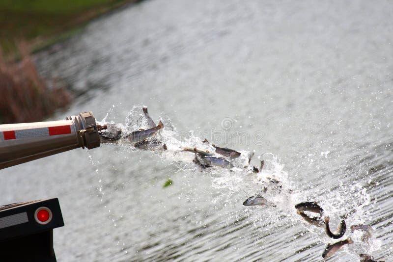 Stockage du lac images libres de droits