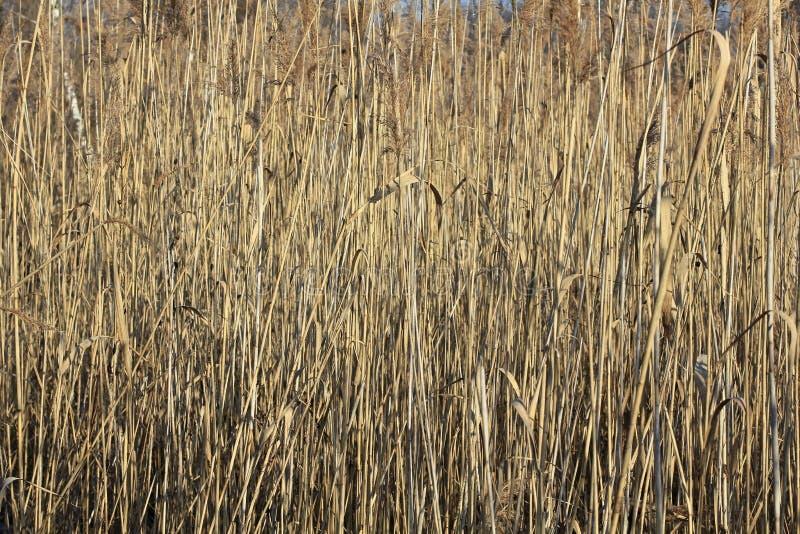 Stockbremse auf einem Teich im Winter stockfotografie