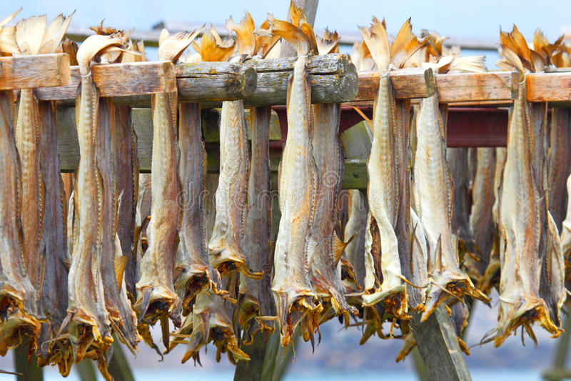 Stockfisch de morue Pêche industrielle en Norvège image libre de droits