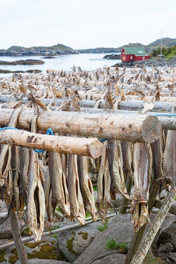 Stockfisch, der an einem Gestell hängt lizenzfreie stockfotografie
