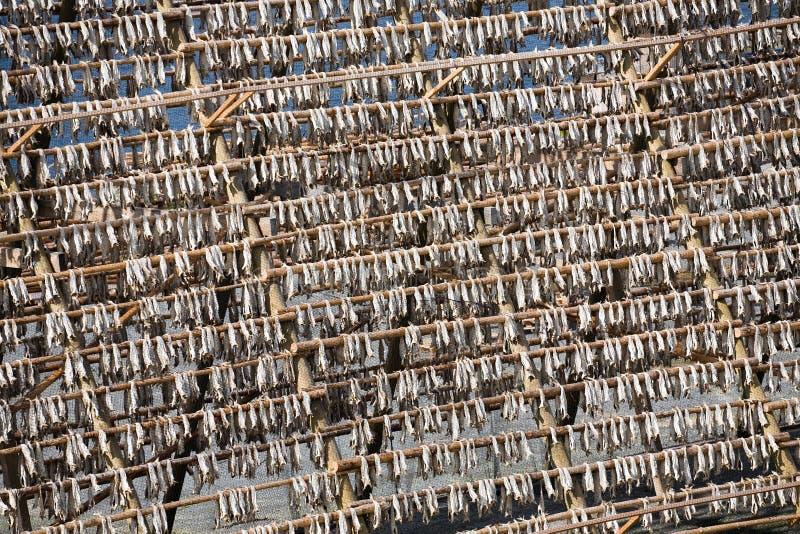 Stockfish fotografia stock libera da diritti