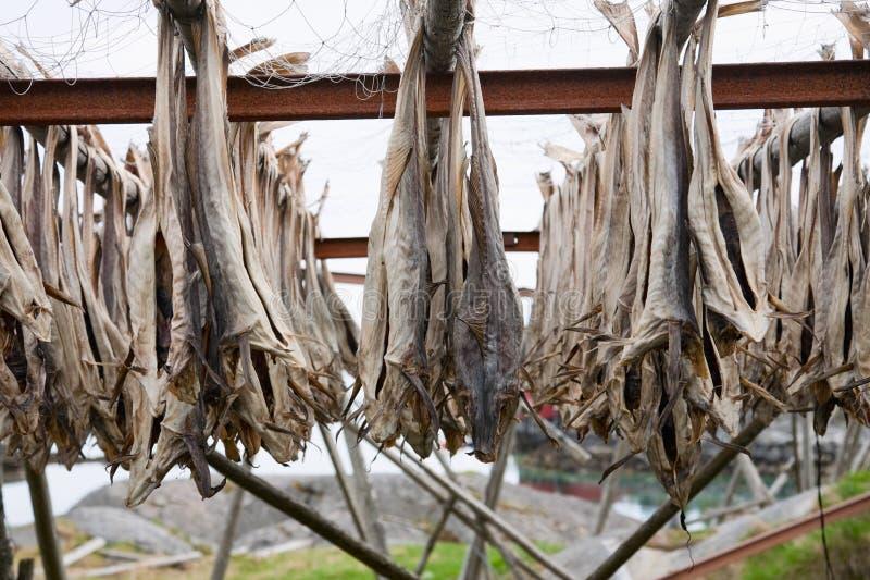 Stockfish do bacalhau imagem de stock royalty free