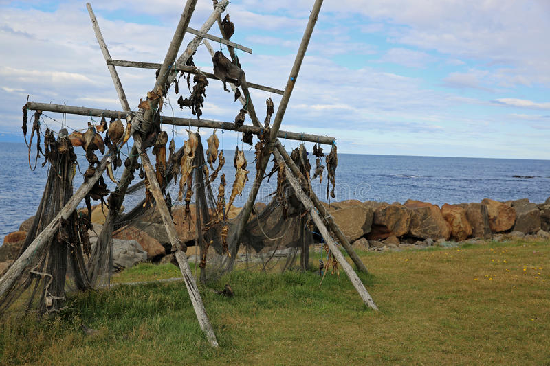 Download Stockfish in Iceland stock photo. Image of closeup, countries - 83720798