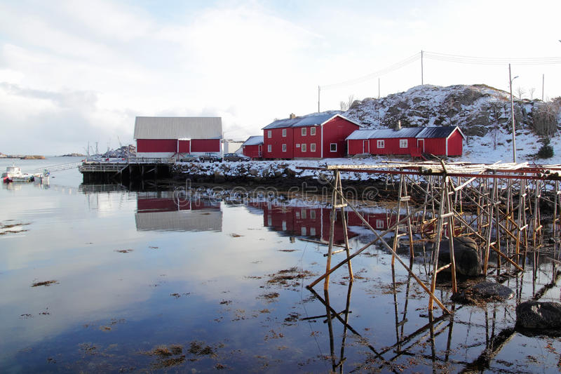Stockfish racks and wooden red cabins. Traditional wooden racks where cod is hanging to dry beside a red cabin enlighted by the sunset, Steine in Lofoten islands stock photos