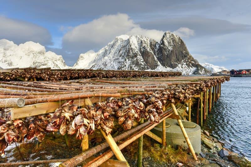 Stockfish - Reine, Lofoten Islands, Norway royalty free stock photos