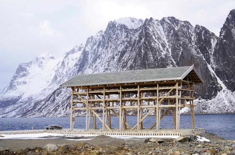 Wooden racks on the foreshore for drying cod fish in winter. Reine fishing village, Lofoten islands. royalty free stock photography