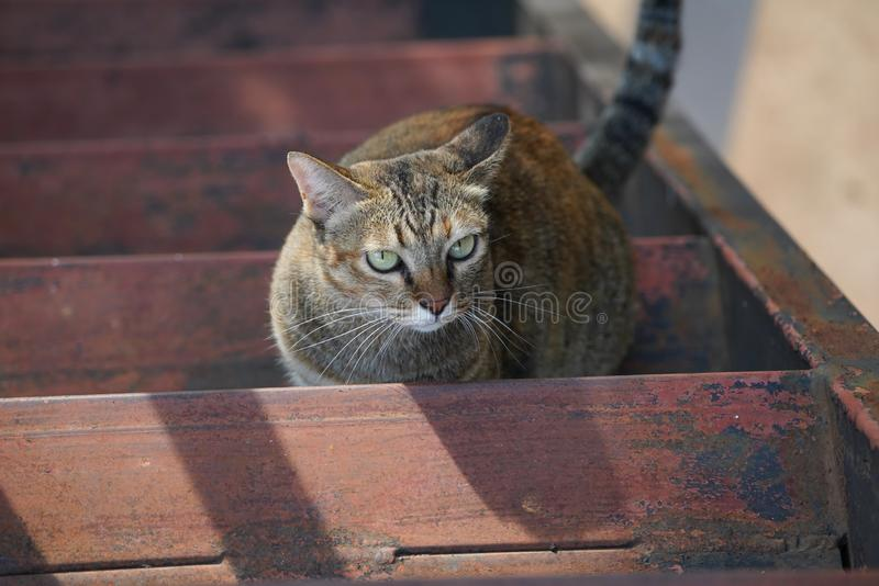 Stockfoto - een kat op trap royalty-vrije stock foto's