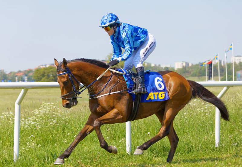 Closeup of female jockey wearing blue clothes riding a gallop horse stock image