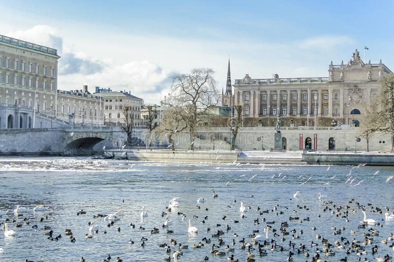 STOCKHOLM, SWEDEN - MAR. 21, 2013 - View of Swedish Parliament and center of Stockholm with lots of birds on canal royalty free stock images