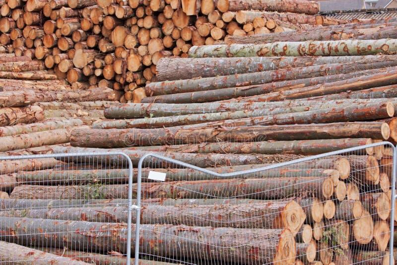 Stockpiled Logs Stock Photography