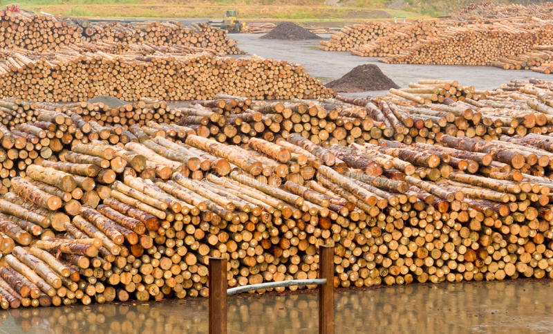 Stockpiled Timber Ready To Be Milled To Lumber Stock Photography