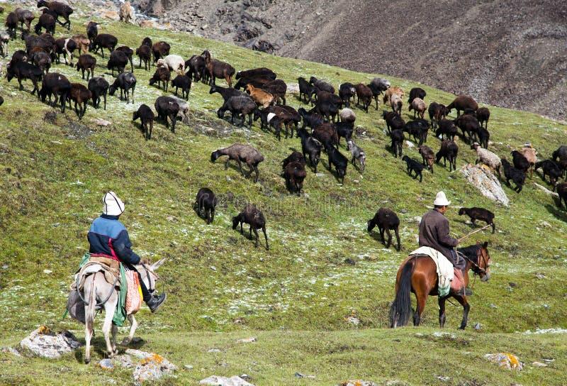 Stockriders avec le troupeau en montagnes d'Alay sur des pâturages photos stock