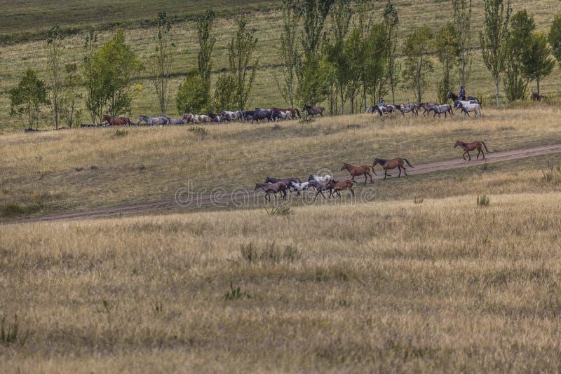 Stockriders met troep in Alay-bergen op weiland - het leven i royalty-vrije stock foto