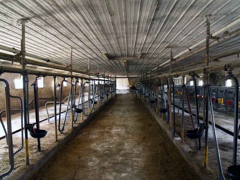stodoła mleczarskich w środku fotografia stock