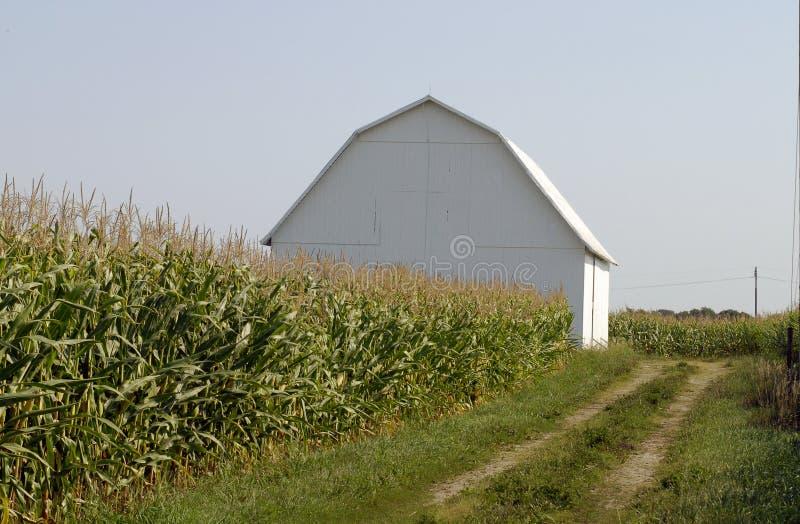 stodole pole kukurydzy fotografia stock