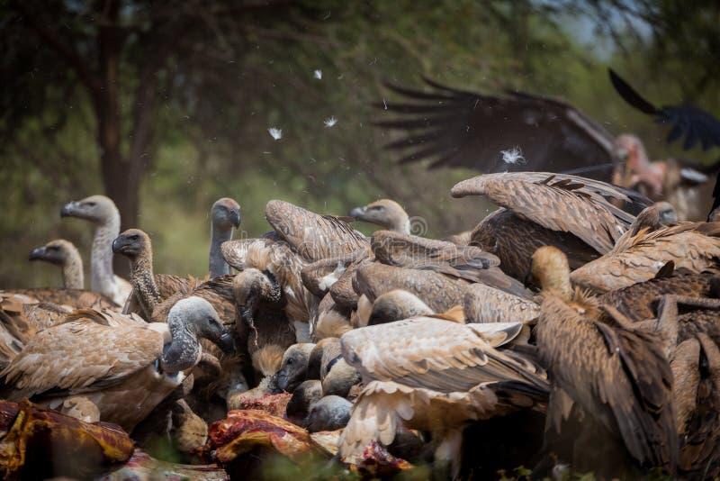 Stof slechts en veren die over thr dood hangen royalty-vrije stock foto's