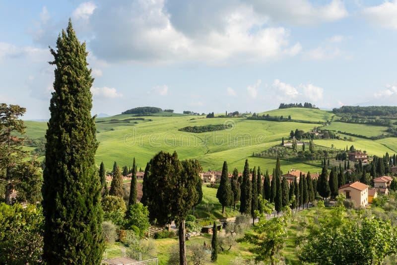 Stoff, grüner Abhang mit Zypressenbäumen im ` Orchia, Italien Val D stockfoto