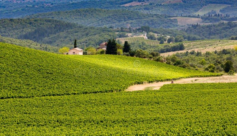 Stoff, Grünfelder von Weinreben im Chianti, Toskana, Italien stockbild
