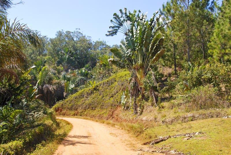 Stoffige safariweg stock afbeeldingen