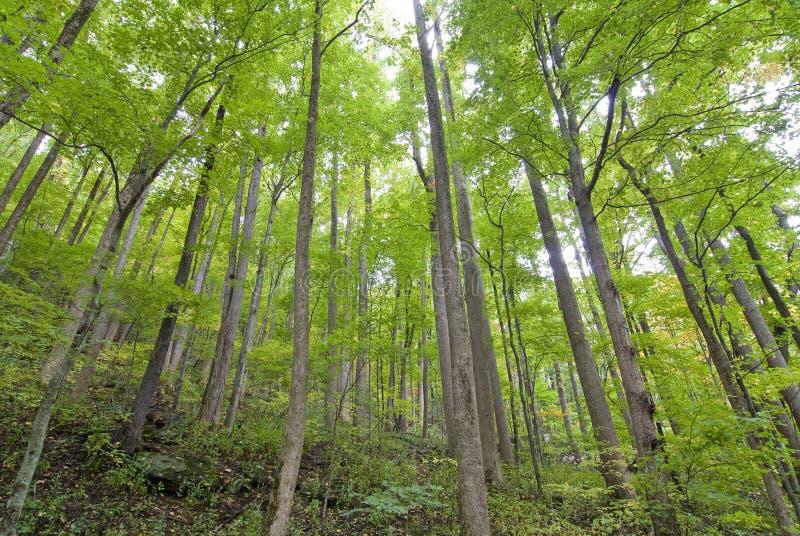 Stojak Młodzi drzewa zdjęcie stock
