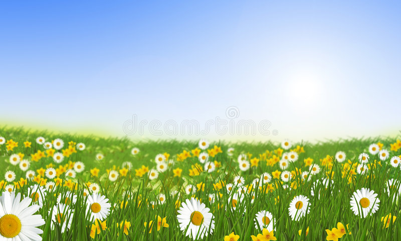stokrotek łąki wiosna obraz stock