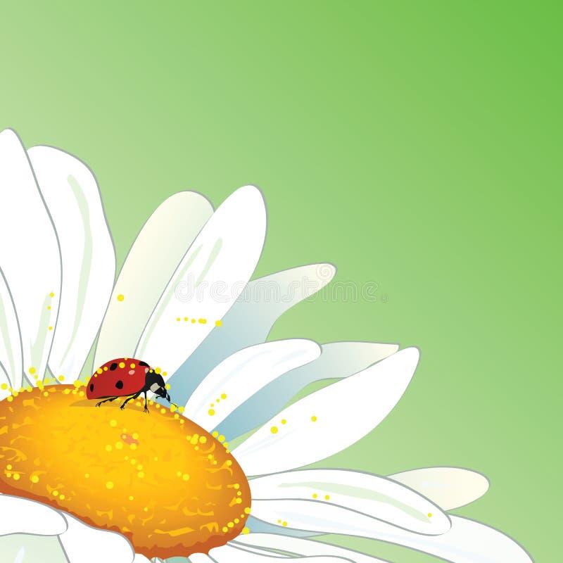 Stokrotka i ladybird royalty ilustracja
