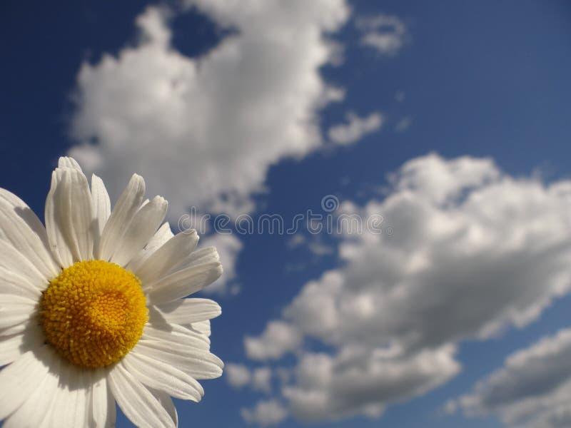 Stokrotka jest jak chmura i słońce w niebie zdjęcie stock