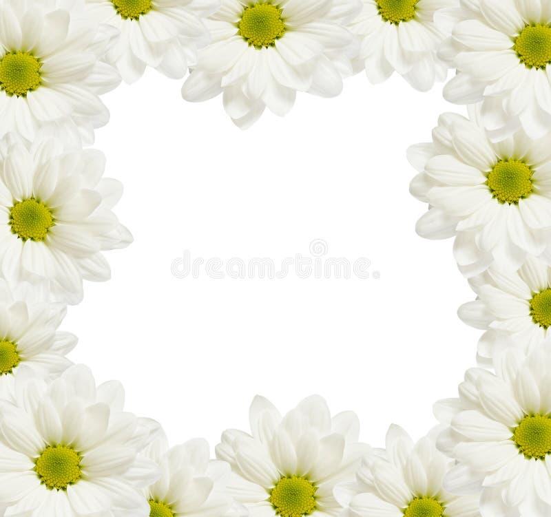 Stokrotka kwiatów rama fotografia royalty free