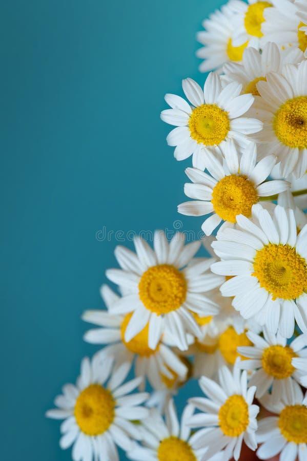 Stokrotka kwiatów rama na błękitnym tle Mieszkanie nieatutowy Odgórny widok obrazy stock