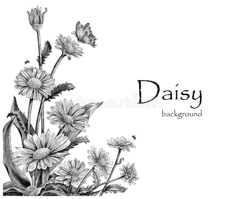 Stokrotka kwiaty wręczają rysunkowego rocznika na białym tle ilustracja wektor