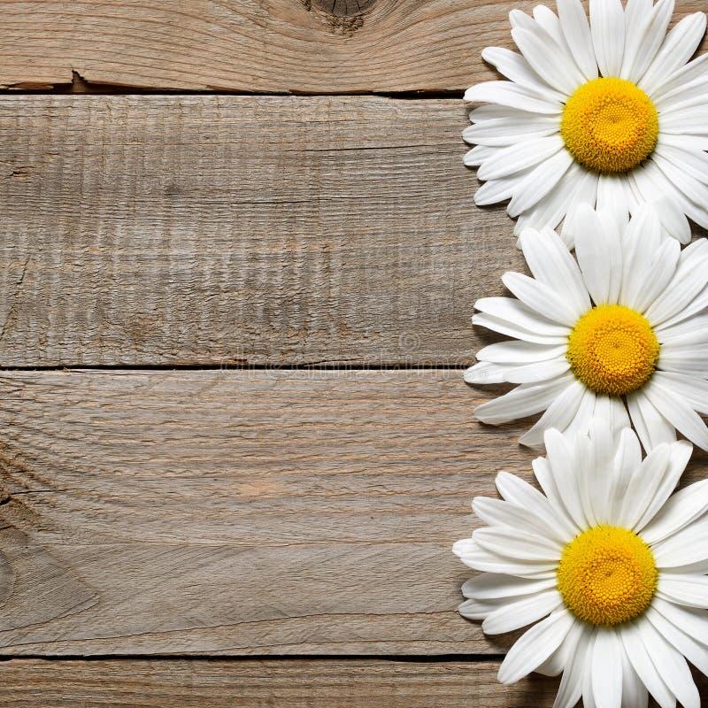 Stokrotka kwitnie na starym drewnianym tle zdjęcia stock