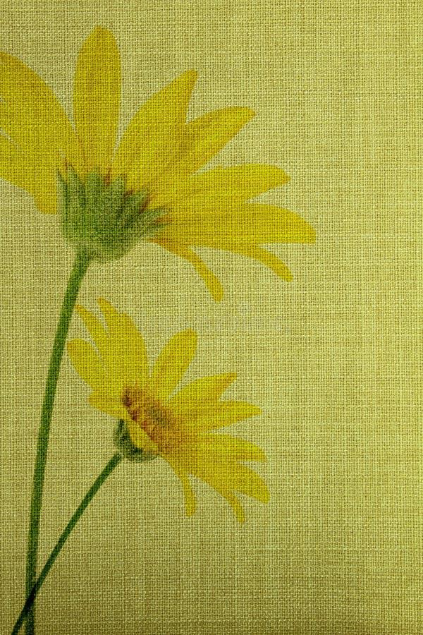 Stokrotka kwitnie tło ilustracja wektor