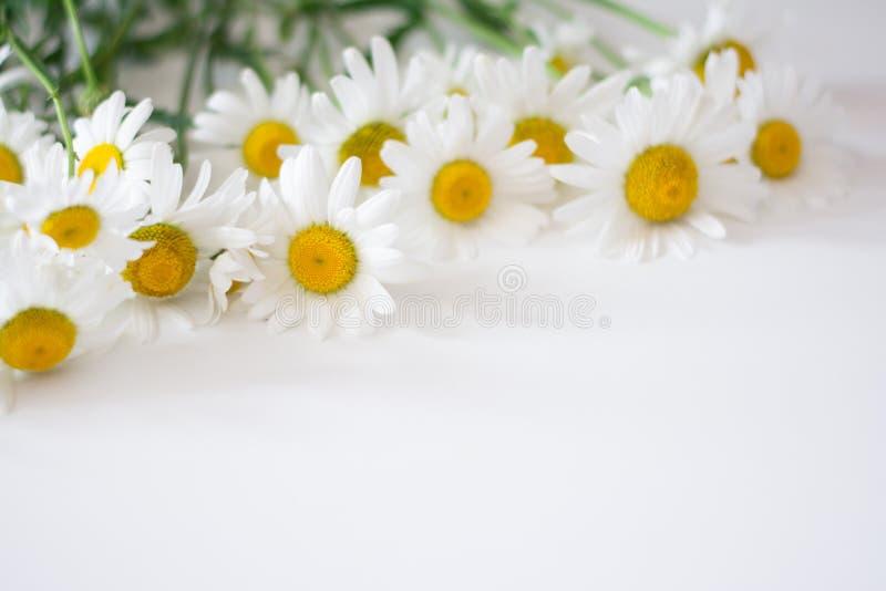 Stokrotki chamomile rama na białym tle zdjęcie stock