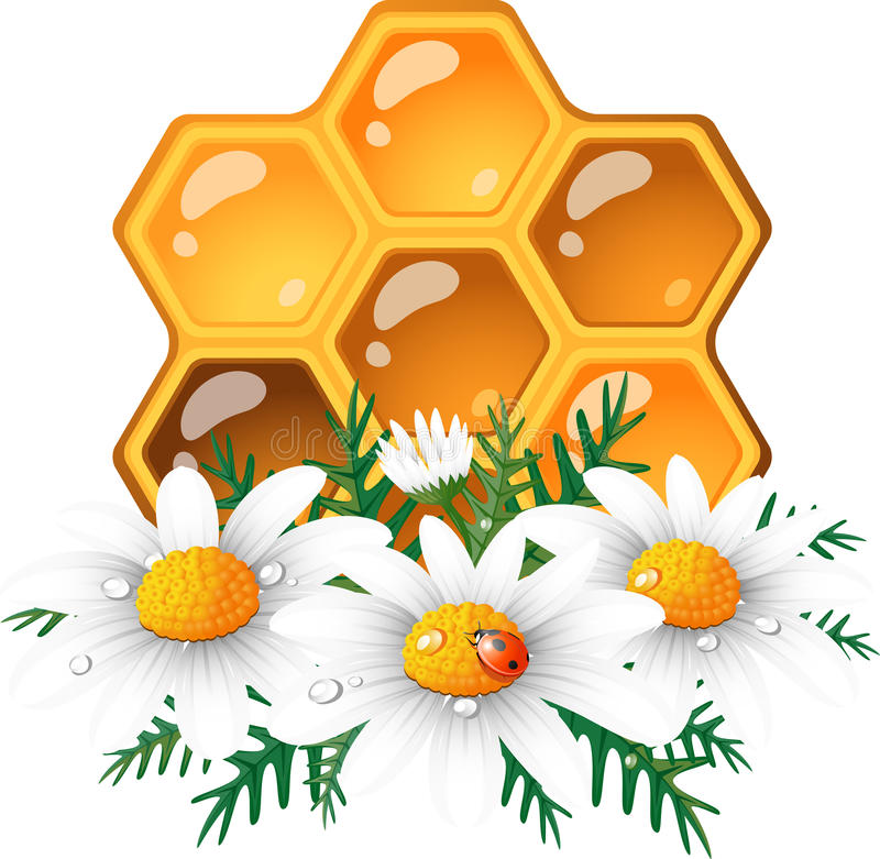 stokrotki honeycomb ilustracji