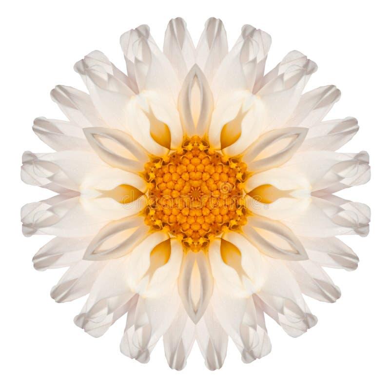 Stokrotki mandala kwiatu Kalejdoskopowy Odosobniony na bielu obraz royalty free