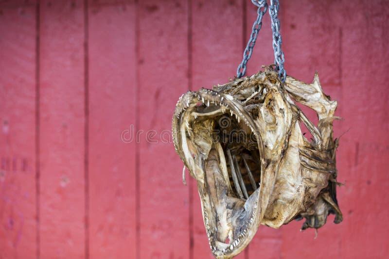 Stokvishoofd aan rood fishermansplattelandshuisje dat wordt geketend royalty-vrije stock afbeeldingen