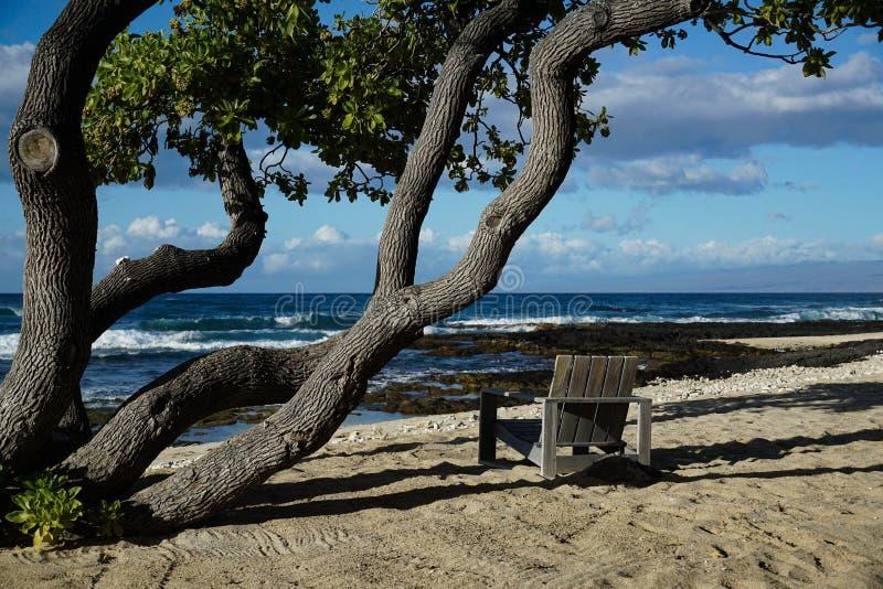 Stol på sandstranden under ett träd som förbiser havet royaltyfria foton