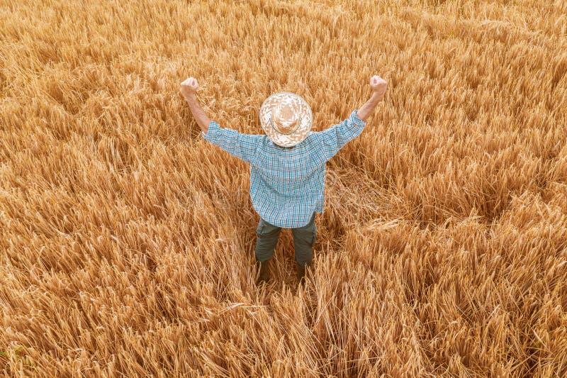 Stolt lycklig segerrik kornbonde med händer som lyfts i V royaltyfria bilder