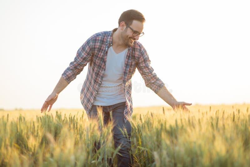 Stolt lycklig ung bonde som går till och med vetefältet som trycker på försiktigt växter med hans händer royaltyfri foto