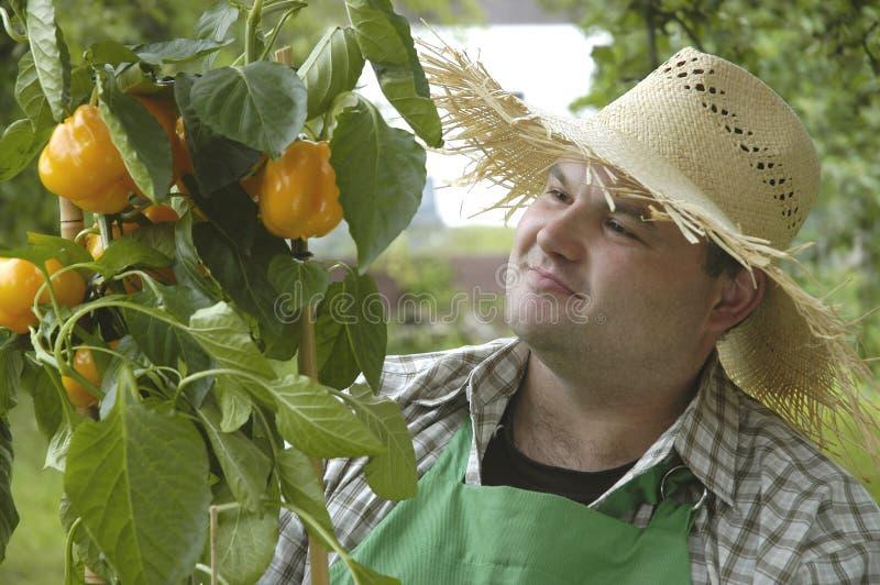 Download Stolt trädgårdsmästare arkivfoto. Bild av folk, blommar - 278532